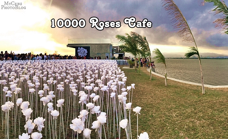 10000-roses-cover